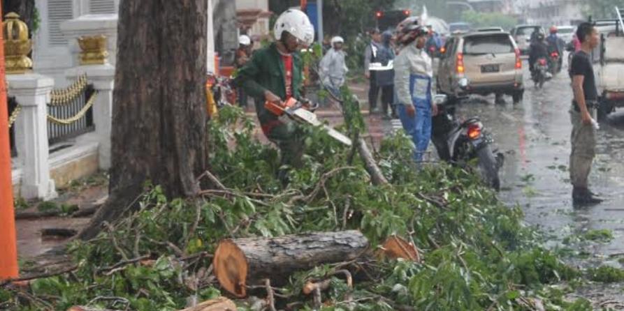 Hati-hati Menebang Pohon Di Surabaya. Kenapa?